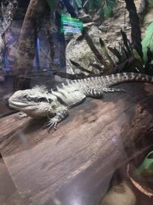 Do lizards get diabetes too?