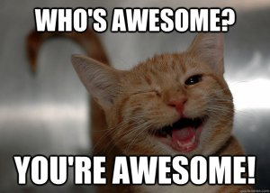 Cat awesome